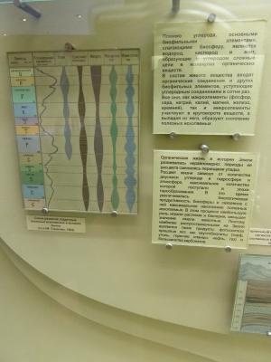 """Фото для """"Схема развития осадочных полезных ископаемых в истории Земли"""""""