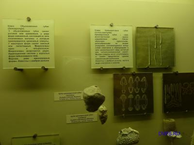 Класс Обыкновенные губки ( Demospongia)