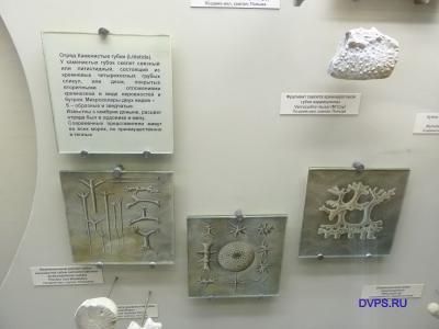 Отряд каменистые губки (Litistida).