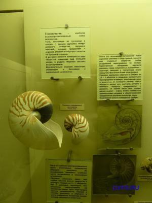 """Фото для """"Головоногие моллюски"""""""