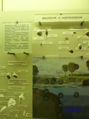 Экология и морфология брюхоногих.
