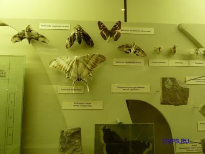 Бабочки из музея палеонтологии