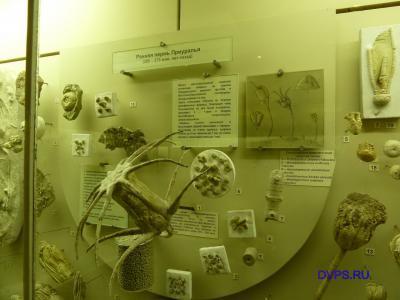 Ранняя пермь Приуралья (285-275 млн. лет назад)