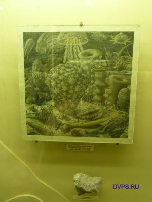 Подводный мир мелководья позднекембрийского моря (500-490 млн. лет назад)