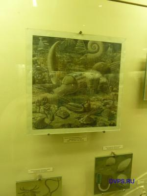 Обитатели мелководного залива ордовикского моря (488-443 млн. лет назад)
