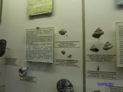 Раковины брюхоногих моллюсков, Средняя Юра