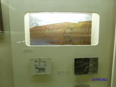 Место раскопок профессора В.П. Амалицкого на р. Северной Двине