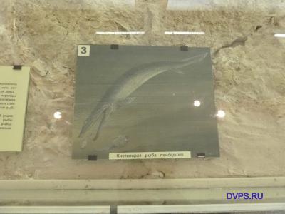 Кистеперая рыба пандерихт