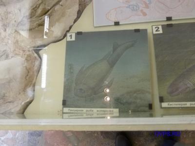 Панцирная рыба астеролеп