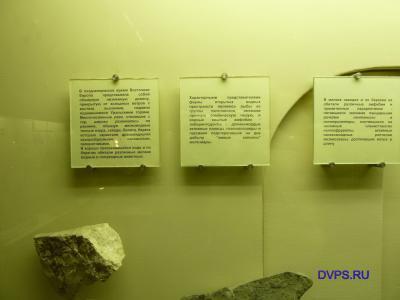 """Фото для """"Восточная Европа в позднепермский период"""""""