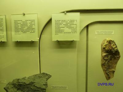 Скелет парарептилии лантаниска Lanthaniscus efremovi ivachnenko