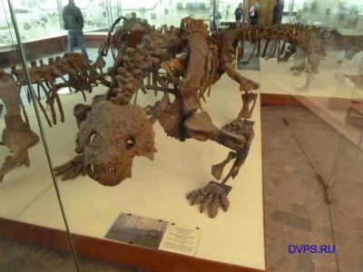 растительноядные парейазавры - скутозавры