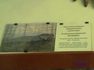 Растительноядная парарептилия скутозавр Scutosaurus karpinskii (Amalitzky), Поздняя пермь