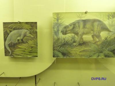 Позднетатарская фауна Малой Северной Двины