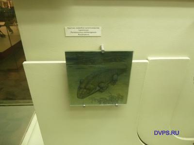 Крупная амфибия-капитозавроид паротозух Parotosuchus jrenbugetsis Konzhukova