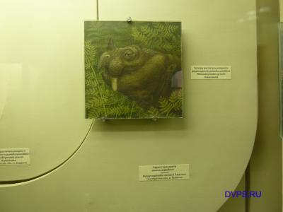 Голова растительноядного дицинодонта ринодицинодона Rhinodicynodon gracile Kalandadze