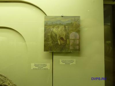 Голова растительноядного дицинодонта рабидозавра, Rabidosaurus cristatus Kalandadze