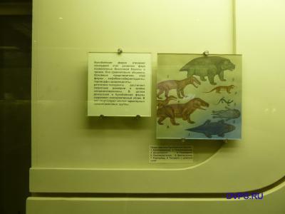 Представители букобайской фауны