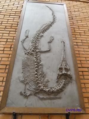Скелет морского крокодила стенеозавра, Steneosaurus boltensis Jaeger