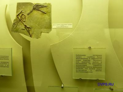 Часть скелета птерозавра сордеса (слепок) Sordes pilosus Shrov