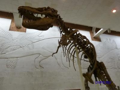 Юрский период - скелет динозавра