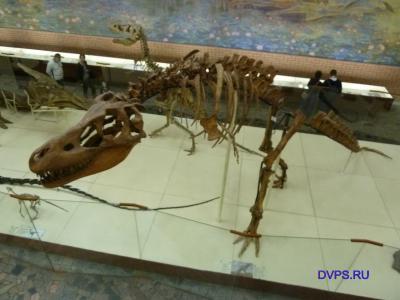 Местонахождение Хобур, скелет динозавра