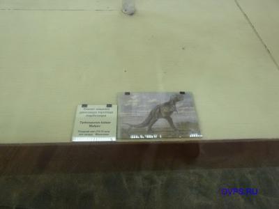 Скелет хищного динозавра теропода тарбозавра