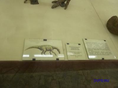 Растительноядный игуанодонтид пробактрозавр
