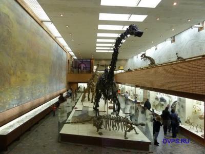Скелеты динозавров в музее палеонтологии