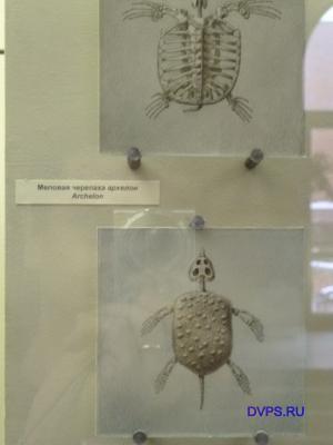 Меловая черепаха архелон Archelon.