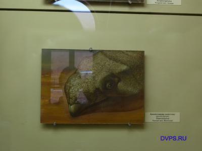 Анхилозаврид шамозавр (реконструкция) Shamosaurus Ранний мел, Монголия