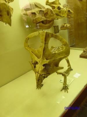 Реконструкция внешнего вида динозавров