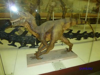 Реконструкция внешнего вида хищного динозавра - теропода дейнониха, Deinonychus antirropus Ostrom