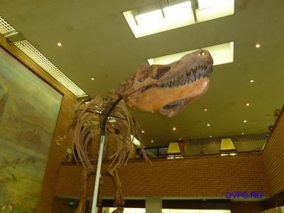 Скелет гигантского хищного динозавра тарбозавра (слепок).Tarbosaurus bataar Maleev. Поздний мел. Монголия