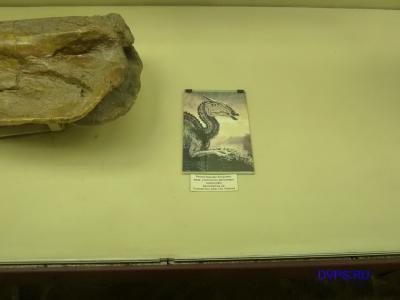 Реконструкция внешнего вида утконосого динозавра завролофа Saurolophus sp. Поздний мел, Азия, Сев. Америка