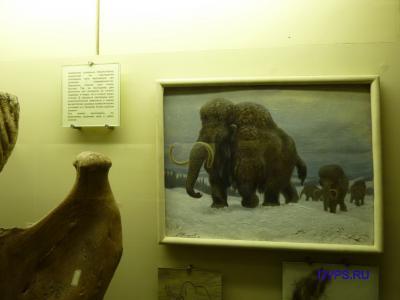 Семейство слоновых (Elephantidae)